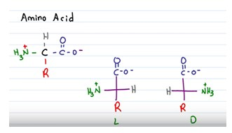 Amino Acids, Amides and Chirality | A-Level Chemistry